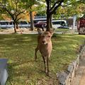 奈良公園の写真_321808
