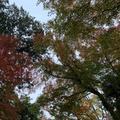 玉泉院丸庭園の写真_327650