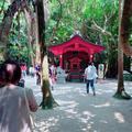 青島神社の写真_339073
