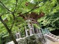醍醐寺の写真_358549