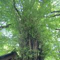 貴船神社の写真_366000