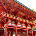 氷川神社の写真_370759