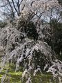 醍醐寺の写真_371495