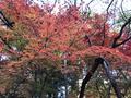 龍安寺の写真_372968