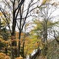 湯滝の写真_389847