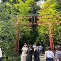 來宮神社の写真_425310