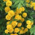平野神社の写真_425766