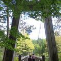 赤沢自然休養林の写真_96474