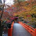 高山寺の写真_11411