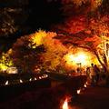 もみじ回廊の写真_11420