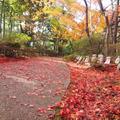 八幡山ロープウェーの写真_11813