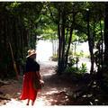 備瀬のフクギ並木の写真_127784