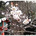 荏柄天神社の写真_183188