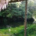 富士山本宮浅間大社の写真_191924
