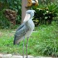 上野動物園の写真_219612