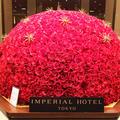 帝国ホテルの写真_245954