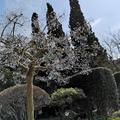 箱根ガラスの森美術館の写真_266431