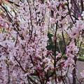 東京ミッドタウン日比谷 の写真_266472
