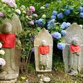 矢田寺の写真_283355