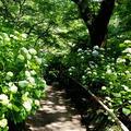 矢田寺の写真_283362