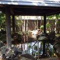 阿蘇坊中温泉夢の湯の写真_2970