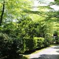 有楽苑の写真_37208