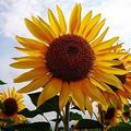 山中湖花の都公園の写真_40934