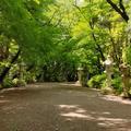 香取神宮の写真_428793