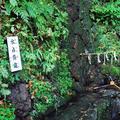 貴船神社の写真_57627