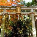 蓮華寺の写真_57778
