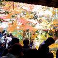 蓮華寺の写真_58479
