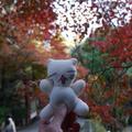 今熊野観音寺の写真_59807