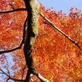 今熊野観音寺の写真_59809