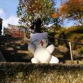 今熊野観音寺の写真_59811