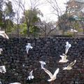 大阪歴史博物館の写真_62787