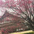 総持寺の写真_66786