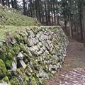 七尾城山の写真_68655