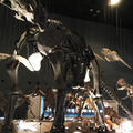 神奈川県立生命の星・地球博物館の写真_69987