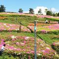 湘南国際村センターの写真_73618