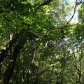 茶臼山の写真_7900