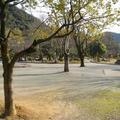 岐阜公園の写真_119707