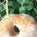 dough-doughnutsの写真_139854