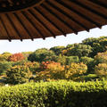 大仙公園・日本庭園の写真_159979