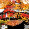 今熊野観音寺の写真_163212