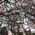 渚親水公園・ムーンテラスの写真_168497