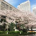 東京都庁の写真_173321
