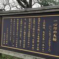 一心行の大桜の写真_174148