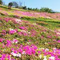 湘南国際村センターの写真_175481