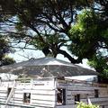 Cafe Madu ENOSHIMAの写真_180762