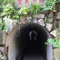 万葉公園の写真_193721